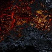 """""""SURVIVANCE"""" - Chêne - tirage numérique 50 x 75 cm - 2015"""