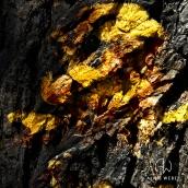 """""""L'OR AU COEUR"""" - Tilleul - tirage numérique 50 x 50 cm - 2015"""