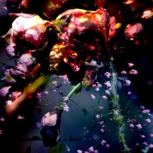 "Hanami - ""Taizan-fukun"" - tirage numérique - 60 x 90 cm - 2012"