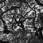 """CHÊNE, Morrens, N°15"" - 2015 - 27 x 16 cm"
