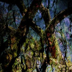 """""""LES DEUX GRANDS SAGES"""" - Sapins blancs - tirage numérique 60 x 90 cm - 2015"""